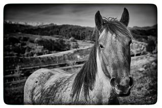Horse-Landscape. Caballo-Paisaje. B&W