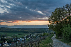 sonnenuntergang (Marcel Huth) Tags: deutschland germany hessen weinberg wald himmel sky wolken sonnenuntergang baum feldweg