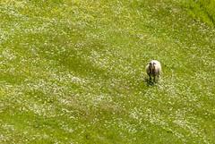 Impressionism (simone_aramini) Tags: nature spring colors colori campagna cloudy naturallight nikond200 nikon nationalgeografic ngc natura valnerina vallodinera lavalnerina landscape lucinaturali landscapes life appennino animal absolutelystunningscapes umbria umbrialandscapes rural ruralphotography