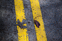 I'll just...paint over it (Stray Toaster) Tags: saffron walden double yellow lines leaf print