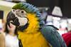 La Doris (Macarena Riegel) Tags: animales exoticos guacamayos expomascotas
