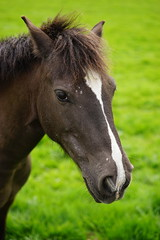My new horse friend :) (Jenny.Lawrence) Tags: horse horses outdoors countryside walking travel trails nature animals