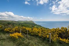 Dorset (anuradhadeacon-varma) Tags: gorseinflower dorset goldencap coast walk