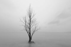 high water (Marc McDermott) Tags: tree water longexposure blackandwhite clouds horizon sky land distant calm serene tranquil peaceful smooth spring