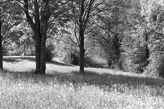 Blumenwiese (HP-Fotografie) Tags: germany hessen wetterau wölfersheim see