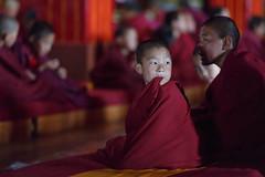 Lost in thought (._-Patrick-_.) Tags: tibet monk mönch monks tawang tawangmonastery monastery buddhism arunachalpradesh arunachal pradesh india northeast northeastindia canon 5diii 135l 135mm people portrait bokeh cute