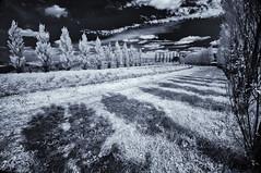 Here we stand (citrusjig) Tags: wisconsin pentax kx sigma1020mmf456 infrared irconverted bw090redfilter fullspectrum blackandwhite toned starvalleyflowers