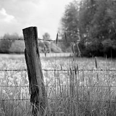 Mamiya183 (salparadise666) Tags: mamiya c330 sekor 180mm super fomapan 100 caffenol cl semistand 32min nils volkmer vintage camera medium format square 6x6 landscape rural nature analogue hannover region niedersachsen germany dof bokeh