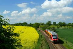 P1190110 (Lumixfan68) Tags: eisenbahn triebwagen baureihe 648 dieseltriebwagen alstom coradia lint 41h deutsche bahn db regio rapsfelder