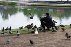 Birdman (martinstelbrink) Tags: street strasse mann man birds vögel park hofgarten palacegarden pond teich düsseldorf duesseldorf dusseldorf nrw nordrheinwestfalen germany sony alpha7rii a7rii voigtländervmeclosefocusadapter zeissplanar50mmmf20 zeiss carlzeiss planar 50mm f20