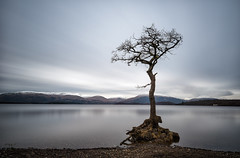 Resolute (Pete Rowbottom, Wigan, UK) Tags: lonetree balmaha lochlomond scotland highlandsofscotland highlands highlandsandislands loch lochs longexposure longexposurelandscape landscape outdoors winter mountains snow lake water peterowbottom leefilters skies stillwater slowshutterspeed slowshutter argyll trossachs nationalpark shore nikond750 shoreline uk uklandscape remote beautiful remotescotland ecosse gnarlytree barren desolate beauty nature natural lomonds munros sparse milarrochy milarrochybay alba explored inexplore