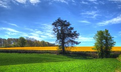 Three colours ( Explored ) (Colin Massey) Tags: rapeseed golden yellow fields cornwall landscape