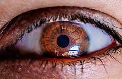 Eye for an eye (Rohit-Malviya) Tags: eyes eye macromondays macromonday nature vision gift nikond5200 nikon 35mm macro light