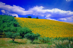 landscape - Marche (alice 240) Tags: autofocus marche europa nature italia travel tourism italy alicealicjacieliczka sky alice240 atelier240art nationalgeographic ngc campo cielo flickr nikon paesaggio blue clouds sunflowers poetry magic dream yellow green landscape flowers simplysuperb