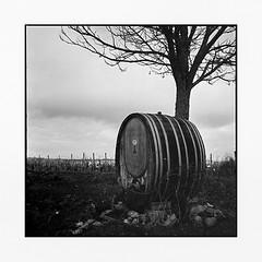 lonely barrel • badenweiler, germany • 2016 (lem's) Tags: rolleiflex tree arbre barrique fut barrel vineyard vignobles badenweiler germany allemagne