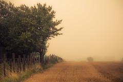 A View of the Eifel (Netsrak) Tags: baum bäume eu europa europe feld forst landschaft natur nebel sommer wald field fog forest landscape ländlich mist nature rural summer tree trees woods rheinbach nordrheinwestfalen deutschland de