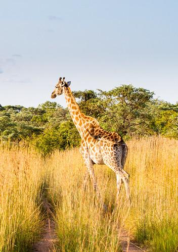 KrugerParkREIZ&HIGHRES-101