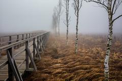 Der Federseesteg im Herbst (Klaus Steinert) Tags: herbst federsee nsg badbuchau nebel landschaft bäume baum steg gras autumn fog dunst landscape tree fall