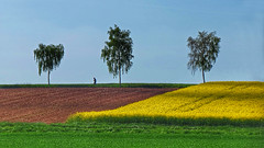 The lone runner (RainerSchuetz) Tags: spring trees running jogging agriculture field rape landscape