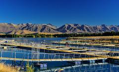 Mt Cook Alpine Salmon farmland (T Ξ Ξ J Ξ) Tags: newzealand mtcook d750 nikkor teeje nikon2470mmf28 farmland salmon farm alpine day cook