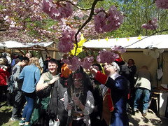 Hanami (gerlindes) Tags: teltow potsdammittelmark landkreisteltowfläming kirschblütenfest japanischeskirschblütenfest hanami kirschbäume zierkirschen cosplayerjacksparrowandhisfriends