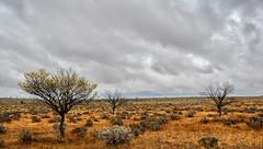 A flat land (Ralph Green) Tags: australia brokenhill newsouthwales clouds grasses landscape saltbush trees