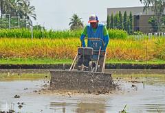Rotavator 2 (Luzon Jim) Tags: irriimages farming farmingtools water paddy nikon outoor d5100 rotavate agriculture irri watermark
