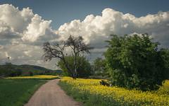 At the Rhine (Netsrak) Tags: rhine rhineland rheinland boppard spay raps cloud clouds wolke wolken landscape landschaft tree trees baum bäume germany deutschland europa europe eu