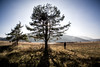 Cerkniško polje (Miha Pavlin) Tags: slovenia slovenija cerknica lake tree backlight person nature sun