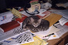 Pile of Ika andTako (meg williams2009) Tags: cats pets animals cutecats funnycats beautifulcats feline kittens kitten filmpicture