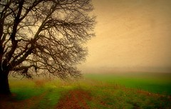 There was no one.. (salihseviner) Tags: therewasnoone nature artwork foggy