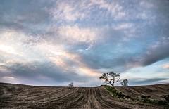Late evening light. (AlbOst) Tags: trees fields skies clouds eveninglight settingsun sundown lowlight