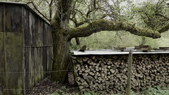 in the valley (erix!) Tags: tree baum brennholz timber scheune schuppen scheuer shack eifel