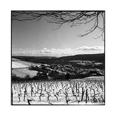 winter • arcenant, burgundy • 2016 (lem's) Tags: rolleiflex planar vineyard snow winter hiver vignobles neige arcenant bourgogne burgundy