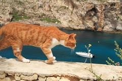 IMG_9829 (alberto.gentile89) Tags: cat redcat malta holidays me canon eos 7d polarizing sea seascape nature hoya colors spring travel