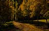 Afternoon-light_DSC9410 (Mel Gray) Tags: wollombi autumn newsouthwales australia hunterregion huntervalley