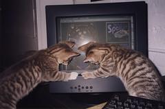 Cyber Cats Ika and Tako (meg williams2009) Tags: cats pets animals cutecats funnycats beautifulcats feline kittens kitten filmpicture