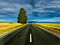 Driving+To+Dunedin