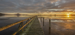 Slippery when wet (zebedee1971) Tags: taupo trout fishing wharf pier structure volcano crater lake sunrise dawn clouds calm windless landscape panorama reflections sky sun light sunlight sunshine wooden wood rail fence weed turangi new zealand north island fog cold autumn slippery damp