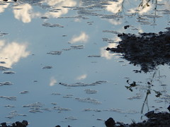 Puddle (amgirl) Tags: spain 2017 navarra puentalareina march31 day2 evening