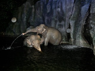 elephant_1330797