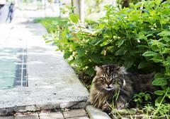 lello (davidecardone72) Tags: cespuglio davide cardone cat