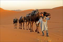 Welcome To Marocco... (rogilde - roberto la forgia) Tags: marocco dune sabbia dromedario composizione nitidezza welcome benvenuti desert deserto cammello tramonto composition ragazzo berbero guida accampamento guide boy benvenuto sunset