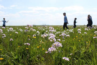 Summer Wildflower Meadow