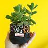 Garden (Carol Grilo • FofysFactory®) Tags: vaso maceta flowerpot cachepot cachepo fofysfactory carolgrilo plant planta garden jardim fabric tecido