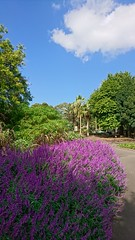 Colors at the botanical gardens (ckrahe) Tags: sydney