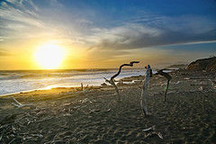 The Sunset in Cambria (John Stankovich) Tags: cambria california pacific pacificocean shore coast beach sand sandy usa sunset moonstone driftwood seascape sea