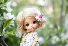 Spring (kllariss) Tags: latidoll lati sophie chu latiyellow happy
