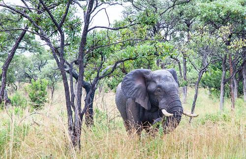 KrugerParkREIZ&HIGHRES-8
