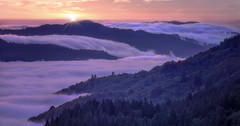 Head in the clouds (Sapna Reddy Photography) Tags: mt tamalpais mountain fog clouds sunset california sanfrancisco statepark trees color cloud sky landscape nature